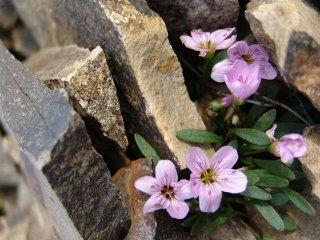 chantel flowers