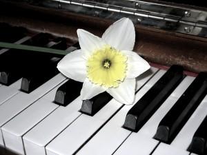 harp & daffodil photo by Jessica Elisabeth