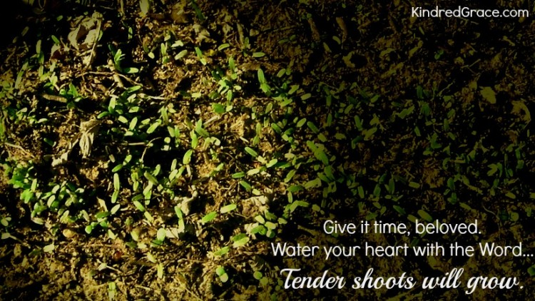 2 Tender Shoots