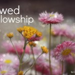 flawed fellowship