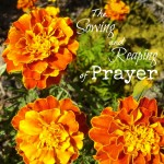 The Sowing and Reaping of Prayer