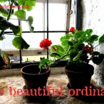 the beautiful ordinary