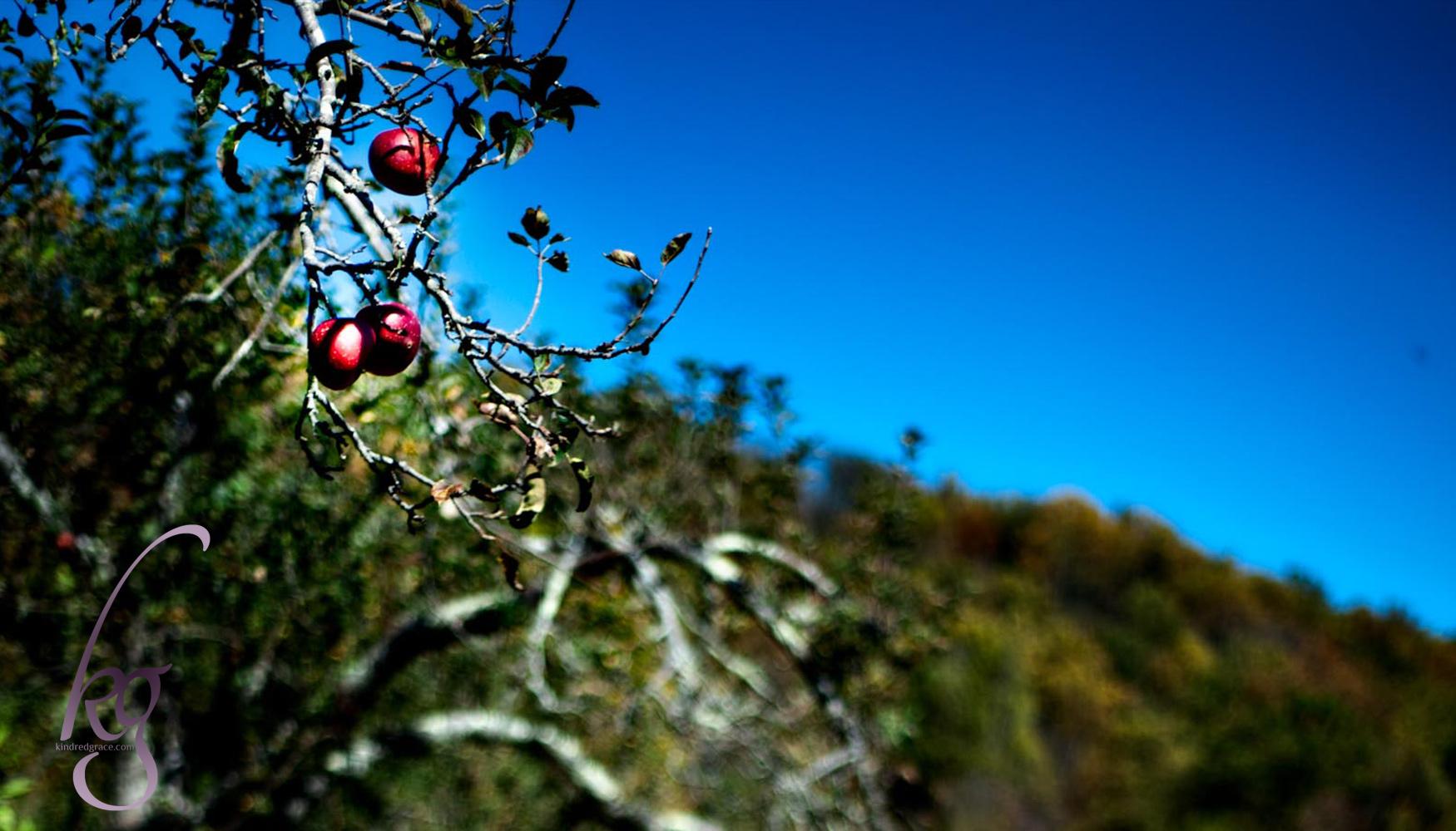 Bearing Fruit In Season