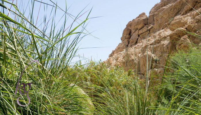 Sons of Korah: Singing Psalms